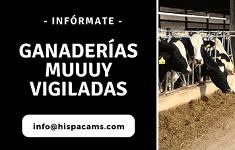 Banner vigilancia de ganaderías